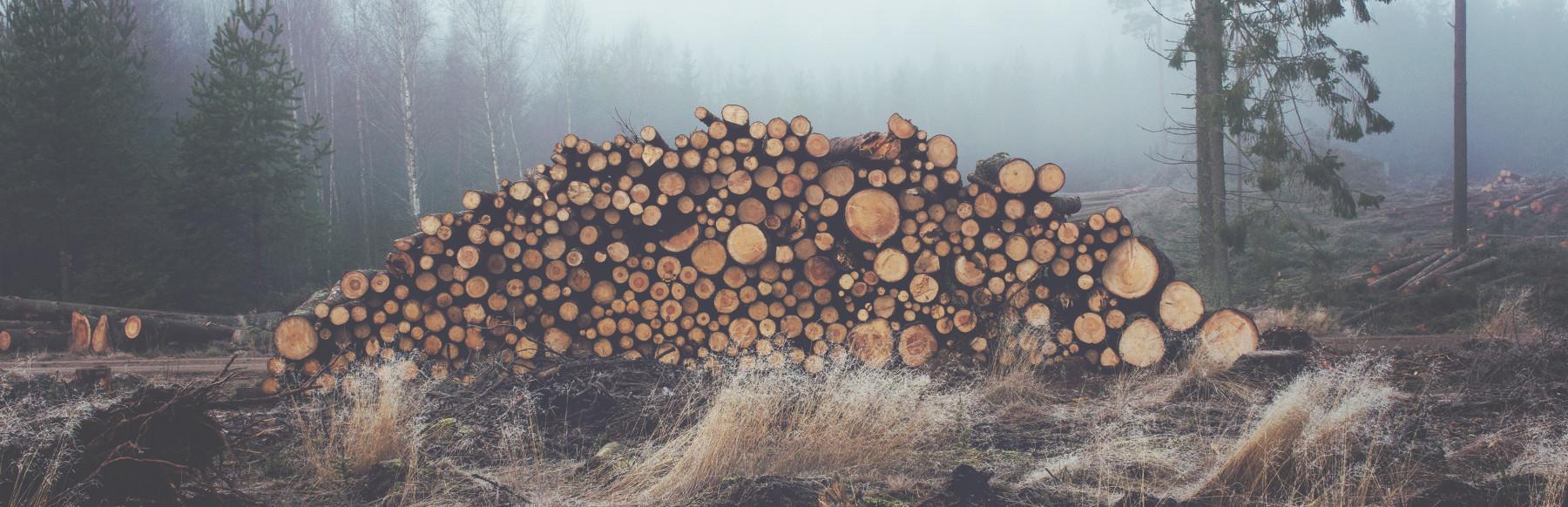 Дрова березовые во Владимире и области